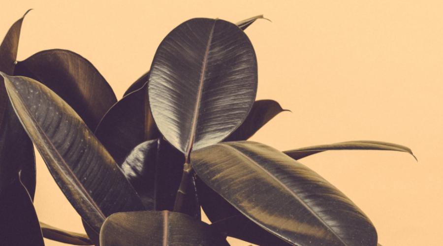 So wachsen Ihre Pflanzen prächtig heran